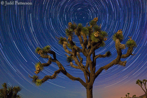 Joshua Tree under the spinning sky