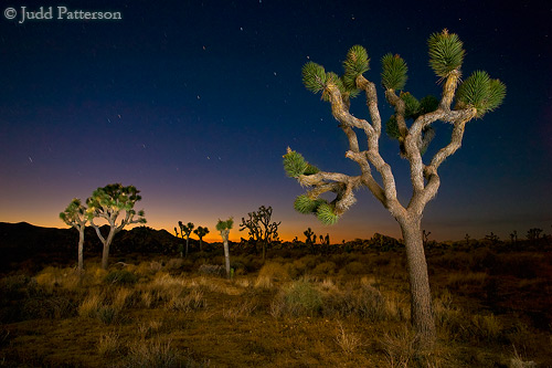 Joshua Tree lit by walking through the scene and popping my flash
