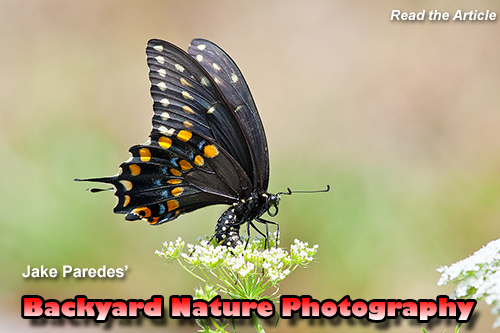 Backyard Nature Photography, click to read.